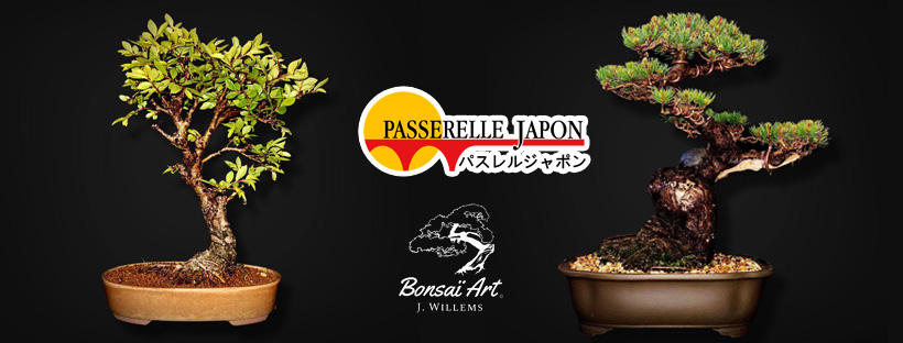 bonsai liège japon